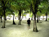 Man walking through palm trees on a tropical island.