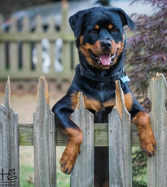 Ellie at fence