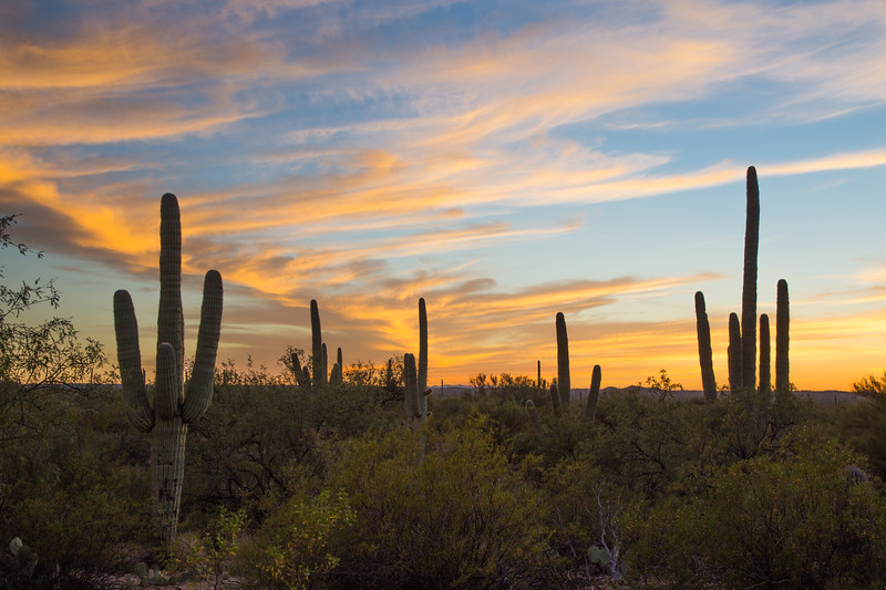 Saguaro East 10-16-2012a.jpg
