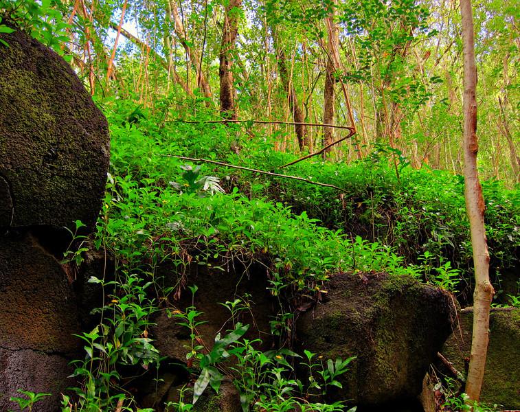 Kauai'10_S90_HDR5TC_23.jpg
