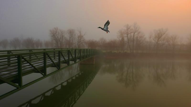 Daybreak in the Fog.jpg