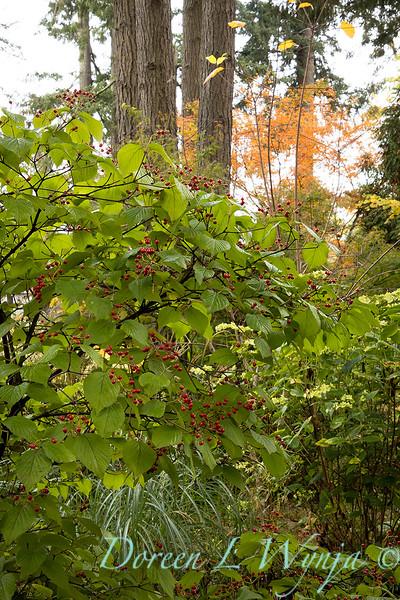 Dietrick fall garden_2099.jpg