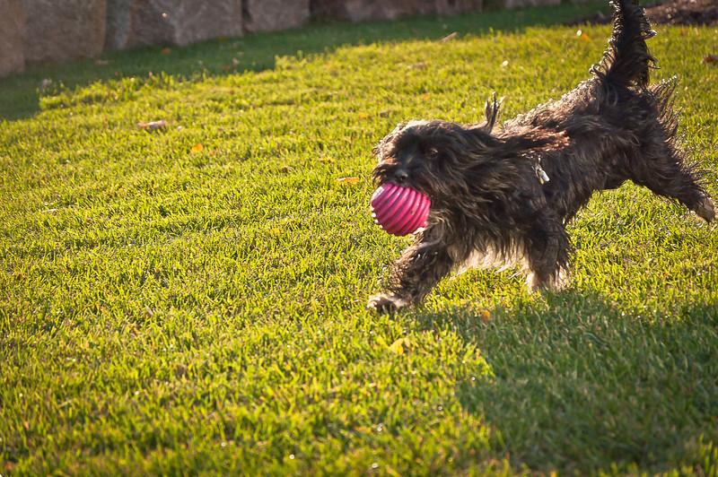 dog run21.jpg