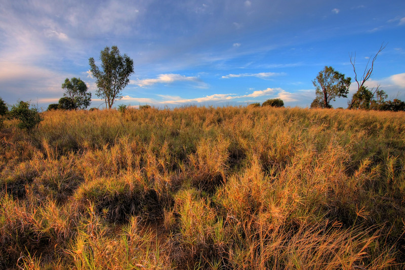 Outback Queensland. This was along the inland route back to Brisbane. Photo by Marikki.