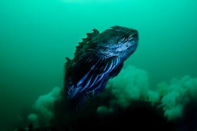 Edmonds Underwater Park 2017-12-30