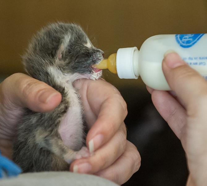 2012-09-12 Kittens-26 Web.jpg
