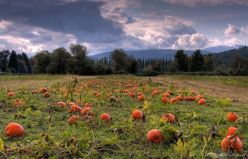 Pumpkins, Fall City