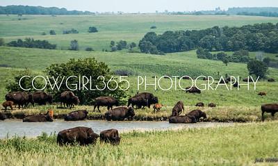 Ranchlife
