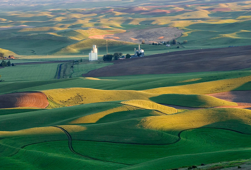 Bountiful America, wheatfields, Washington