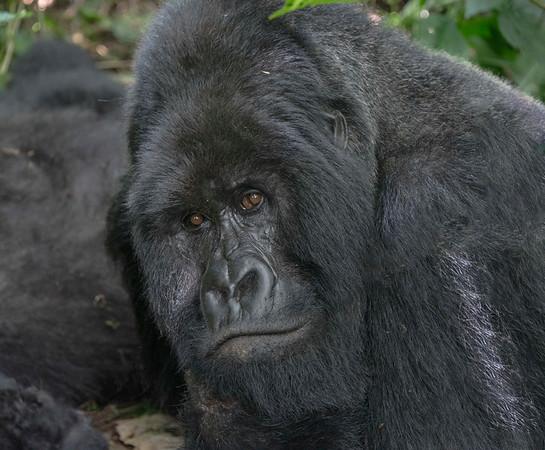 D.R.Congo,Rwanda, Uganda May-June,2017