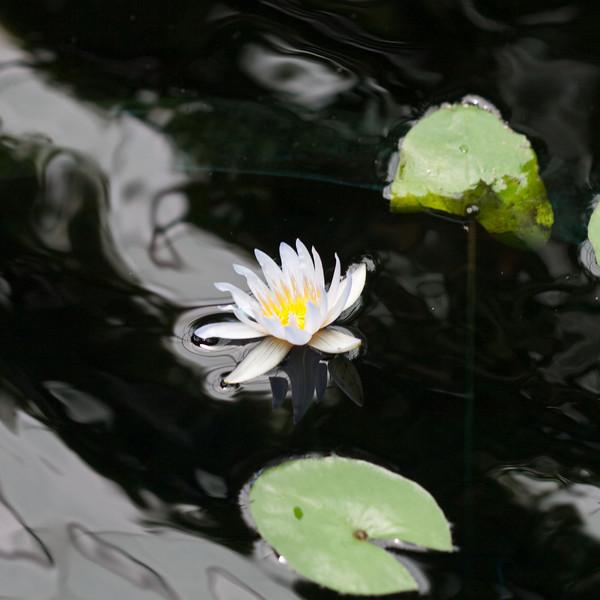 2009 06 30_NY Botanical Gardens_0695_edited-1.jpg