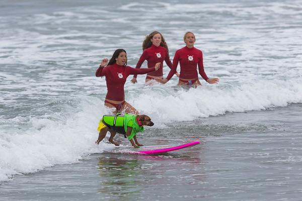 Surf City Dog Surfing Event Huntington Beach 2018