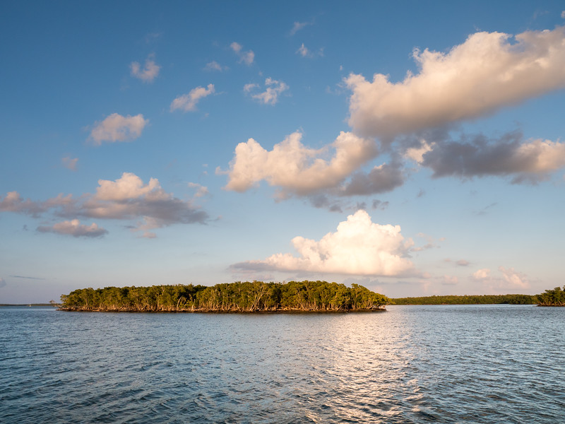 Everglades-134.jpg