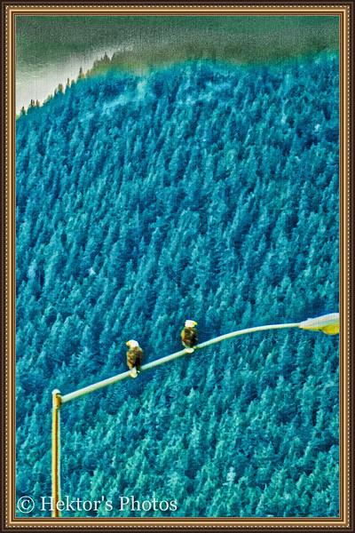 Mendenhall Glacier Excursion-2.jpg