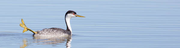 New Mexico with FIELD GUIDES BIRDING TOURS