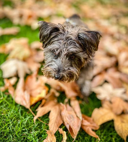Skye, Dog