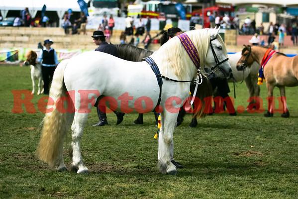 2014 09 29 Perth Royal Show APSB Highland