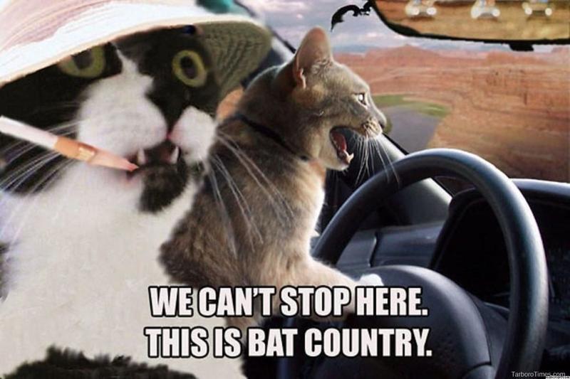 cat-meme-fear-and-loathing-in-4297-1024x682.jpg