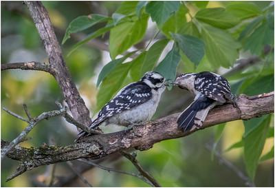July 2020 Backyard Birds