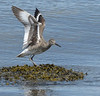 willet spring we jetty