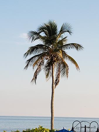 Sanibel Island, September, 2019.