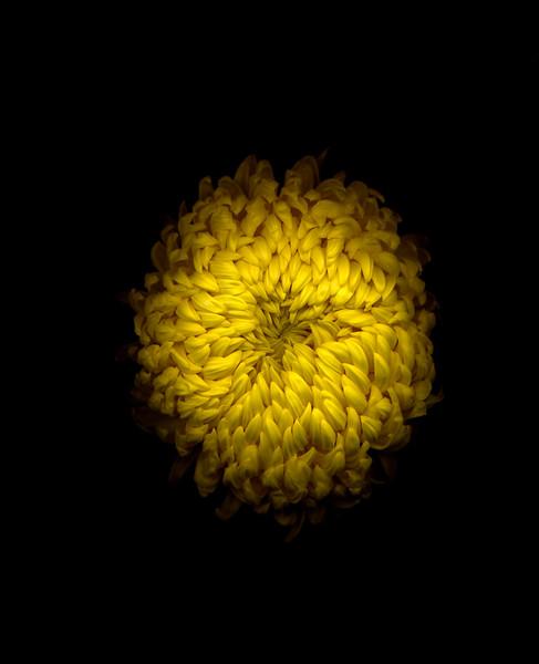 Flowers on Black II