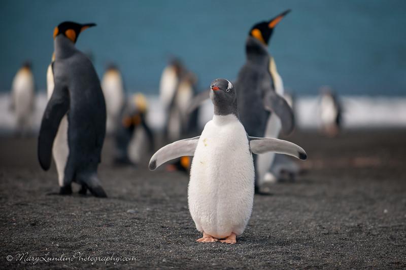 Antarctic-91