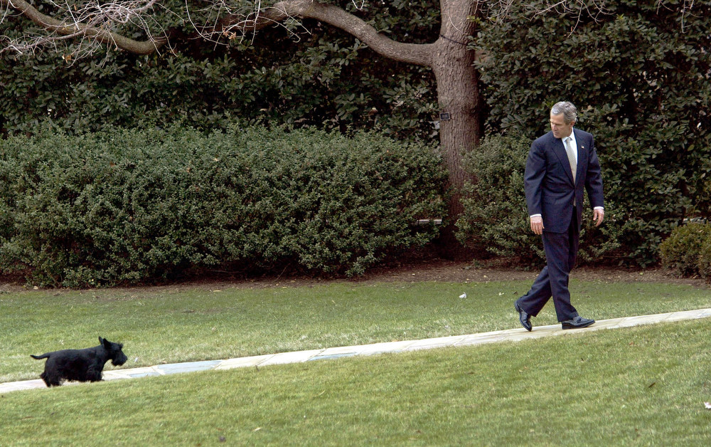. President Bush slows his pace to wait for his dog Barney as he walks to the Oval Office at the White House in Washington,  Monday, Feb. 3, 2003. Bush was returning from a visit to the National Institutes of Health Vaccine Research Center in Bethesda, Md., a Washington suburb, where he promoted his plan to fight bio-terrorism. (AP Photo/J. Scott Applewhite)