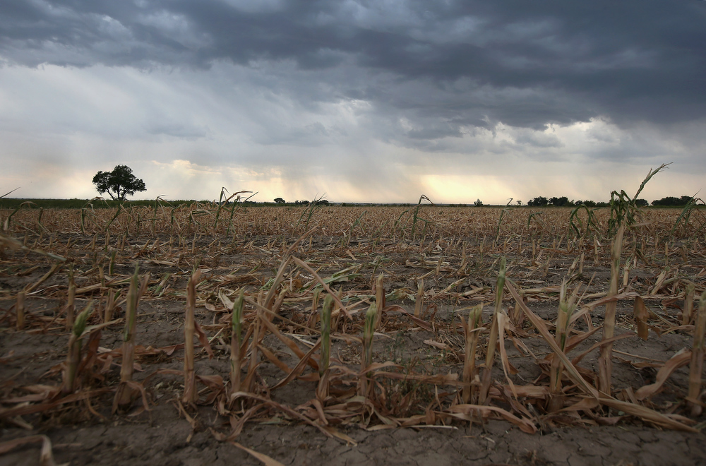 Description of . Rain clouds move over the remnants of parched corn stalks on August 22, 2012 near Wiley, on the plains of eastern Colorado. A summer storm came too late to help farmers whos crops were decimated in the wide zone of exceptional drought in Colorado's eastern plains. Farmer Jay Sneller said that he cut down more than 300 acres of his stunted corn crop to sell as livestock feed to recover some of his losses. Most of the high plains areas of eastern Colorado and virtually all of Nebraska and Kansas are still in extreme or exceptional drought, despite recent lower temperatures, according to the University of Nebraska's Drought Monitor. The record-breaking drought, which has affected more than half of the continental United States, is expected to drive up food prices by 2013 due to lower crop harvests and the adverse effect on the nation's cattle industry.  (Photo by John Moore/Getty Images)