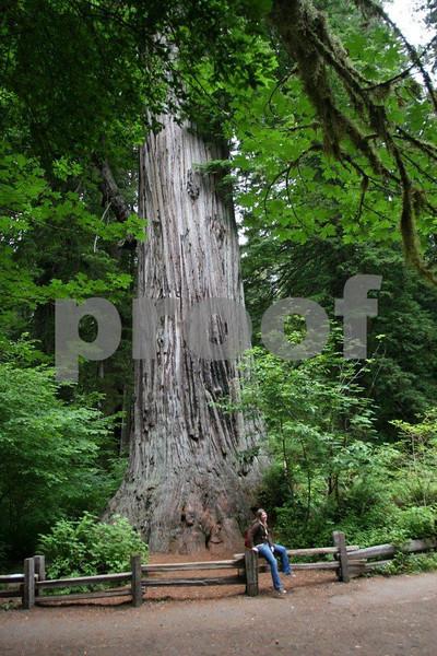 Redwood 2028.jpg