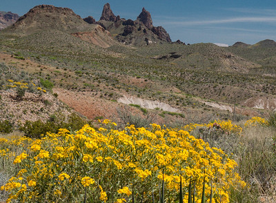 Big Bend National Park in Spring