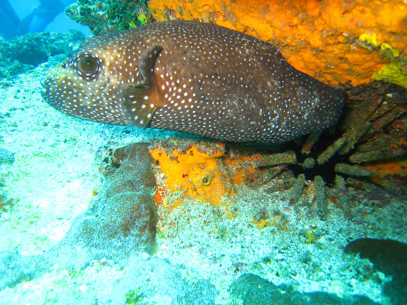Diving in the Galapagos (80 of 392)