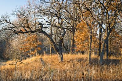 Bluff Spring Fen Nature Preserve