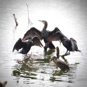 Kaikodarahalli Birds revisited