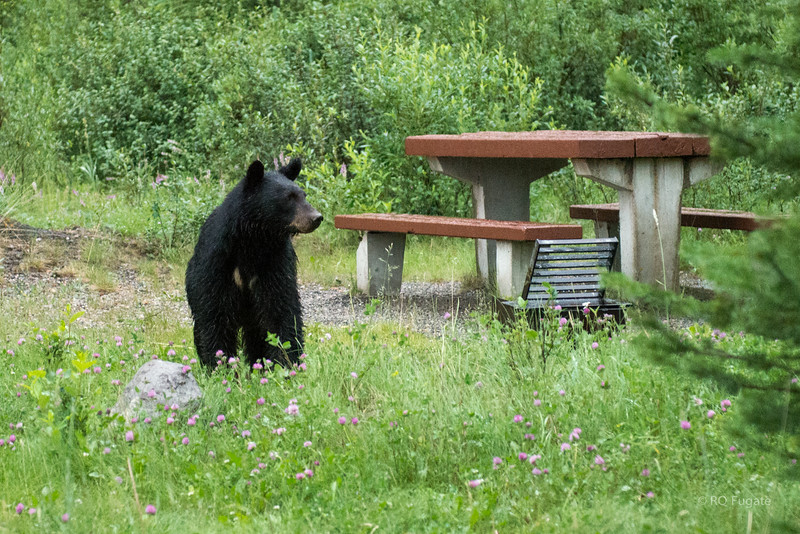 Joe took us ahead to a picnic grounds and sure enough he showed up to see if anyone left anything.
