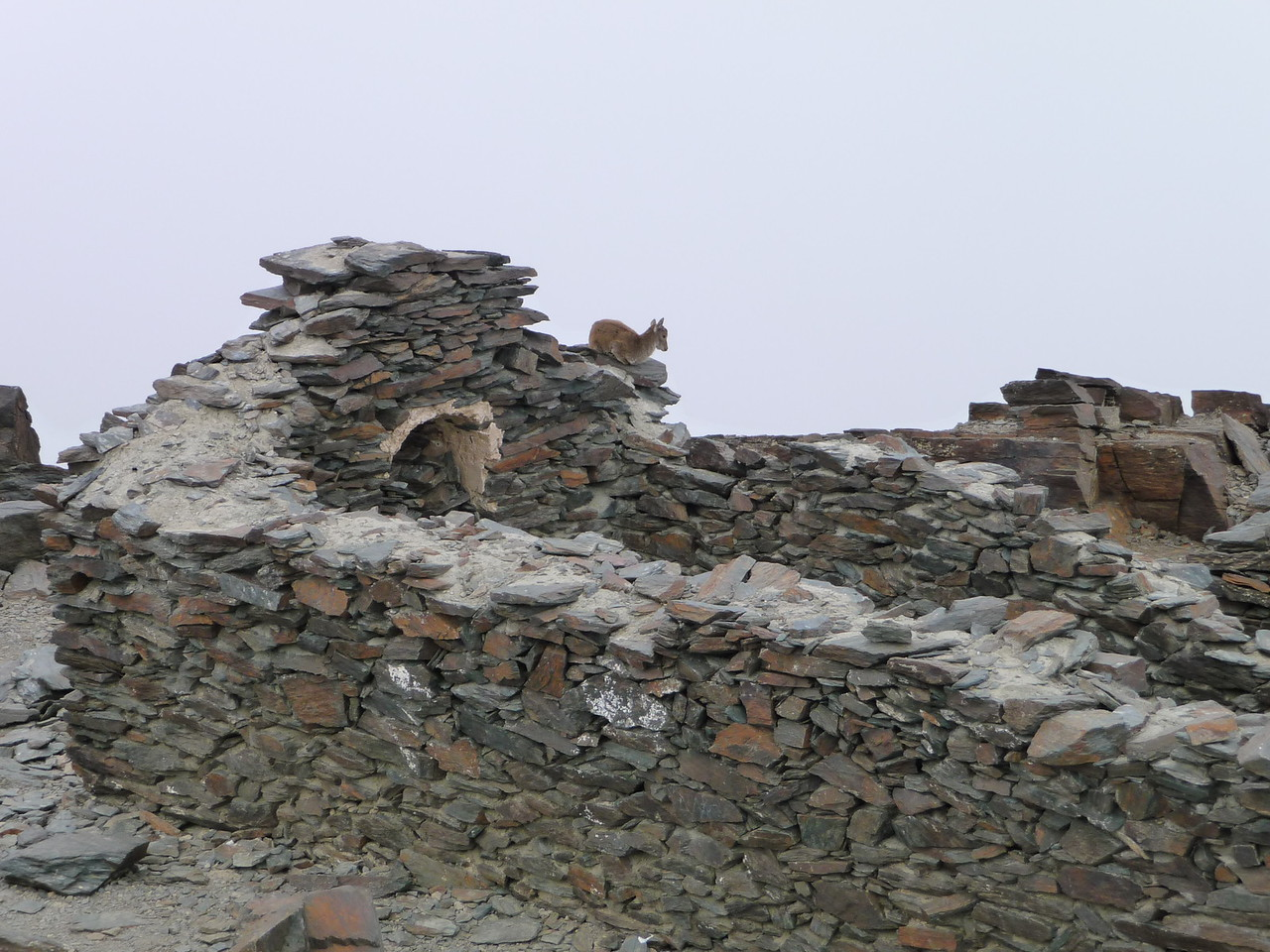 Pico Mulhacen Summit shelter with one permanent resident