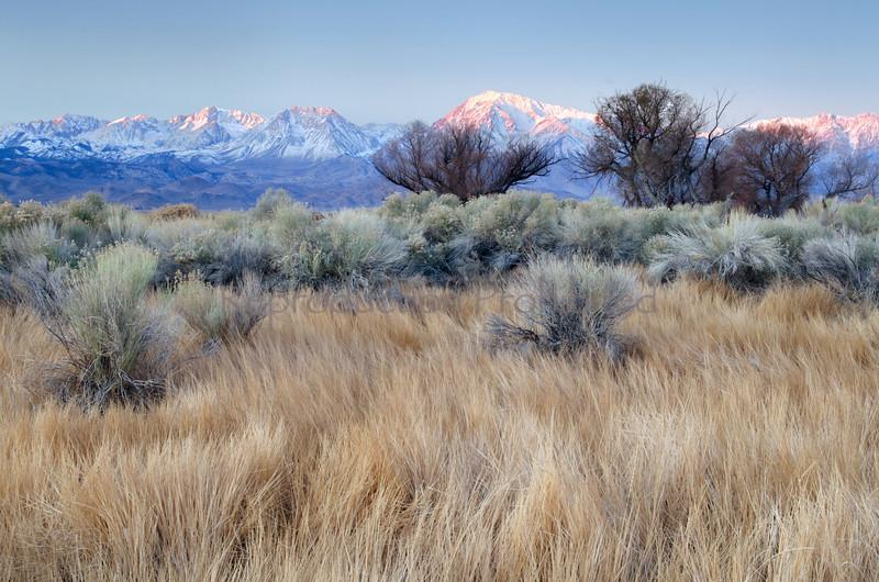Morning Glory Eastern Sierra, California December 2012