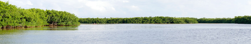 mangrove panorama