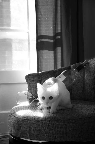 b&w cat.jpg
