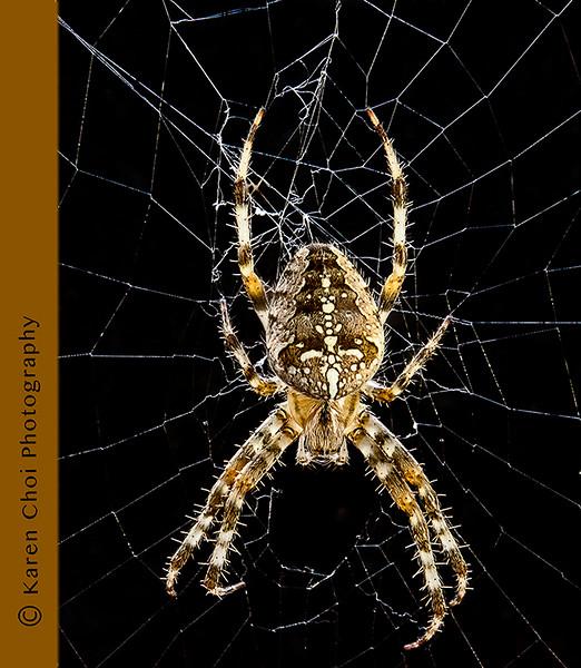 spider 3 small.jpg