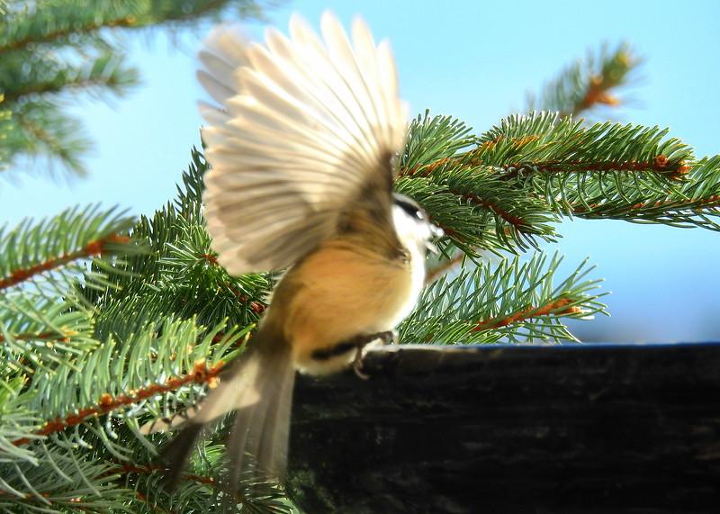 birds (193).jpg