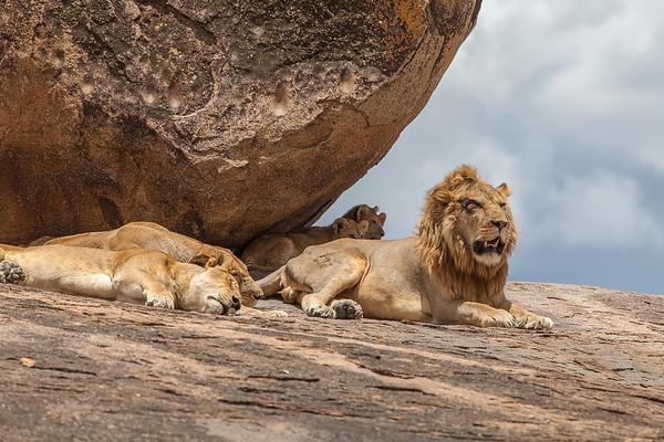 Tanzania Safari 2014