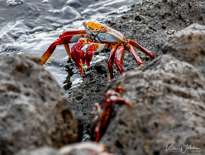 2018 Lobos Island-41.jpg
