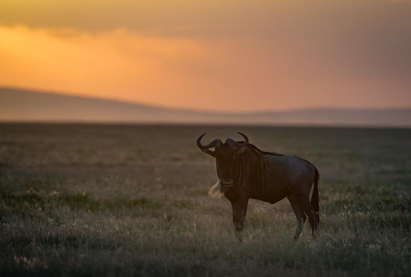 Tanzania_Feb_2018-783.jpg