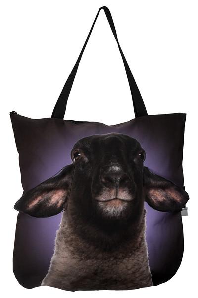 owca suffolk 269.jpg