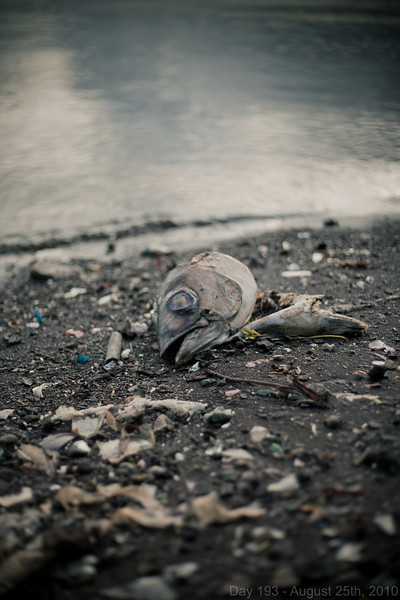 Today, I finished his birthday in Afghanistan with him on Skype before heading to Hickam AFB to watch the last F-15 exercise. Later, I went out with Phil to see how the early evening light looked at a location I want to do a shoot at, and we found a fish-head on the shoreline of broken glass.