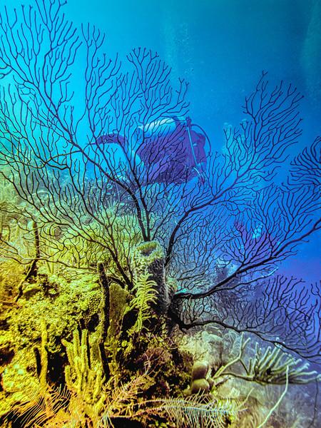 Mo Coral