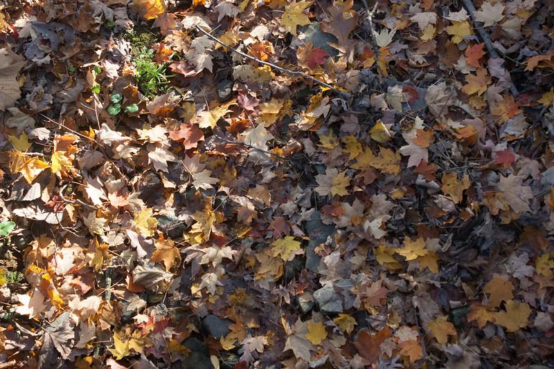 20121021-2012-10-2117-20-3113267.jpg