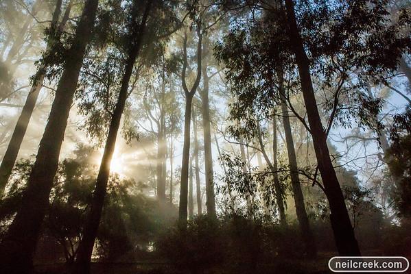 Foggy Morning - 120705