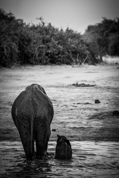Botswana_June_2017 (4393 of 6179).jpg